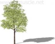 体幹トレーニングと深層筋