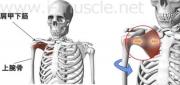 風呂でインナーマッスル:肩の内回転