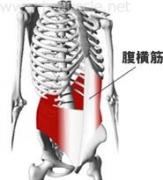 腹部のインナーマッスル:腹式呼吸1