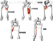 脚腰のインナーマッスル:脚の内転1