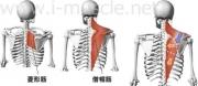 肩のインナーマッスル:腕の挙上2