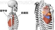 肩のインナーマッスル:前後運動