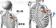 肩のインナーマッスル:腕の挙上1