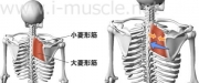 肩のインナーマッスル:腕の挙上3