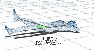 脚を根元の股関節から動かす